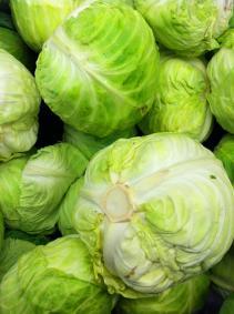 cabbage MGD©