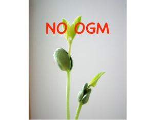 No OGM