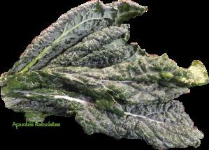 lacinato-kale